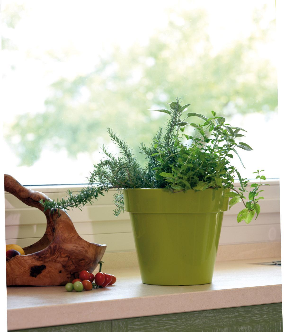 Vaso nicoli in resina di polietilene zeus fiorinmaurizio for Vasi nicoli